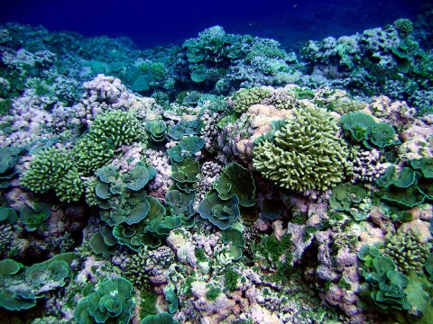 A pristine reef in American Samoa. (NOAA/NMFS/PIFSC/CRED, Oceanography Team)
