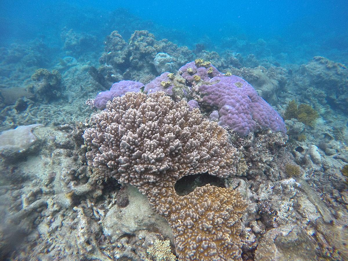 Reef shop online australia