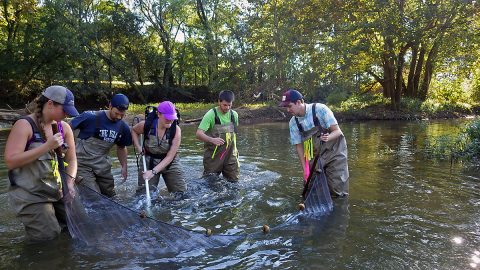 APSU Field Biology graduate student Joshua Stonecipher has received three grants to study the darter fish that lives in tributaries of the Cumberland River.