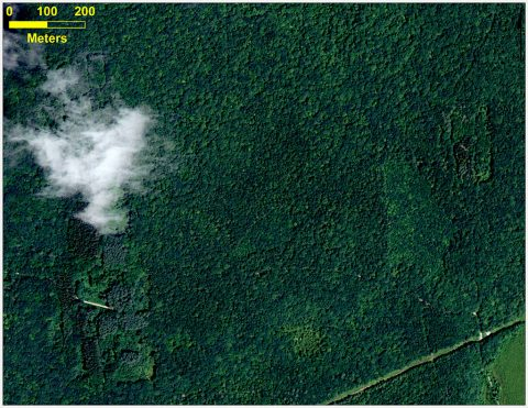 This is an aerial photograph of a forest in Connecticut. (Katharine Johnson)