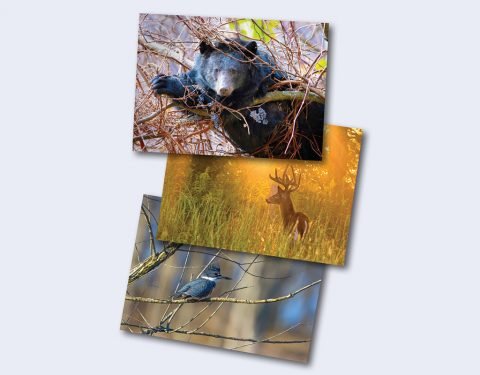 Entries for the 2017-18 Tennessee Wildlife Calendar Photo Contest now being accepted.