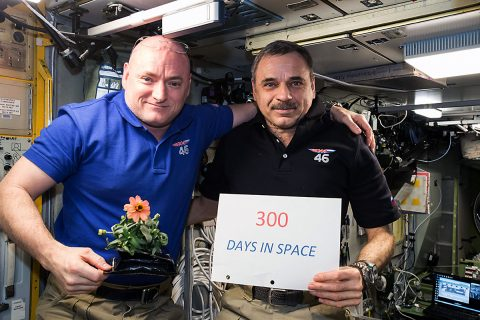(01-22-2016) --- One-year mission crew members Scott Kelly of NASA (left) and Mikhail Kornienko of Roscosmos (right) celebrated their 300th consecutive day in space on Jan. 21, 2016. By spending a total of 340 days aboard the International Space Station, the astronauts help scientists understand what happens to the human body while in microgravity for extreme lengths of time. Kelly is holding a zinnia grown in space as part of the Veggie experiment on the International Space Station. (NASA)