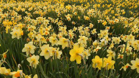 Opportunity Blooms in Tax Season