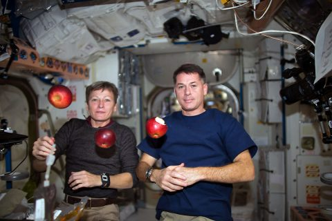 Expedition 50 crew members Peggy Whitson (left) and Shane Kimbrough of NASA (right) share fresh fruit that was recently delivered by the HTV-6 cargo vehicle to the International Space Station. (NASA)
