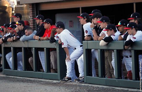 Austin Peay Baseball hosts Mercer Bears at Raymond C. Hand Park this weekend. (APSU Sports Information)