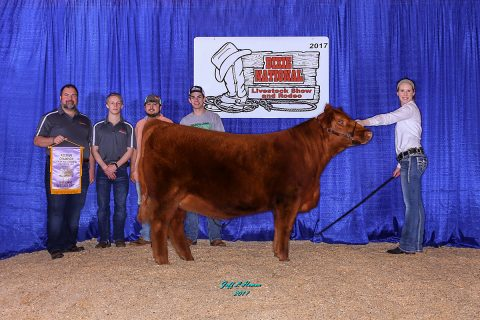APSU Beef Cattle Show Team's prize heifer Ruby was named Reserve Division Champion Percentage at the 2017 Dixie National Livestock show.