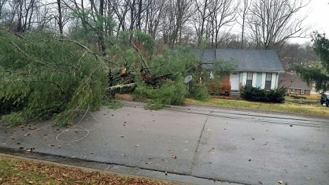 Early morning strong winds knocked down several trees in Clarksville.
