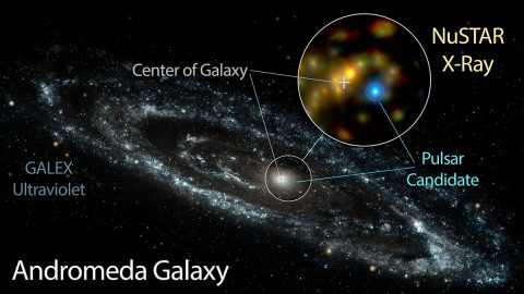 NASA's Nuclear Spectroscope Telescope Array, or NuSTAR, has identified a candidate pulsar in Andromeda -- the nearest large galaxy to the Milky Way. This likely pulsar is brighter at high energies than the Andromeda galaxy's entire black hole population. (NASA/JPL-Caltech/GSFC/JHU)