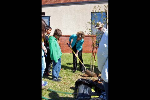 Clarksville Mayor Kim McMillan plants a tree to Celebrate Arbor Day.