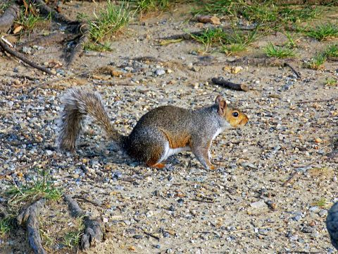 2019 Tennessee Spring Squirrel Season starts May 11th