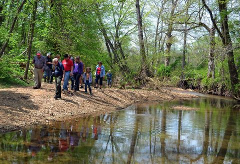 Participants walk with Dr. Chester along Bear Creek in search of wildflowers in Land Between The Lakes. (Denise Schmittou)