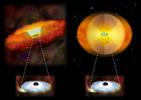 This illustration compares growing supermassive black holes in two different kinds of galaxies. A growing supermassive black hole in a normal galaxy would have a donut-shaped structure of gas and dust around it (left). In a merging galaxy, a sphere of material obscures the black hole (right). (National Astronomical Observatory of Japan)