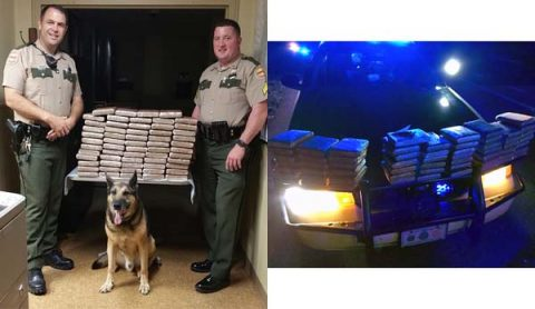 Tennessee Highway Patrol Officers on a traffic stop on I-40 west find 153 pounds of marijuana.