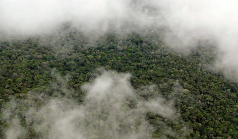 The Amazon rainforest. (Center for International Forestry Research)