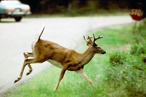 Tennessee Wildlife Resources Agency reports a preliminary positive detection of Chronic Wasting Disease (CWD) in white-tailed deer in Hardeman County and Fayette County.