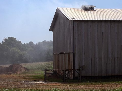 A dark-fired tobacco barn smoking during the curing process.