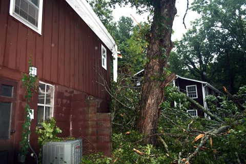 There are fallen tree limbs all across Clarksville.