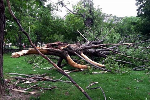 Clarksville Street Department will be doing storm debris pickup for Clarksvillle residents.