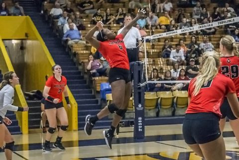 Austin Peay Women's Volleyball now 5-0 in OVC play. (APSU Sports Information)