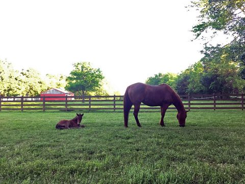 Two horses in Shelby County test positive for Equine Infectious Anemia.