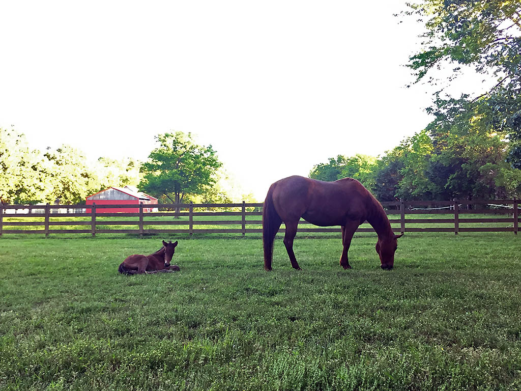 Three new cases of horses sickened by viruses that infect the blood have been reported in Tennessee. Sick horses cannot directly infect people with West Nile Virus and Equine Infectious Anemia.
