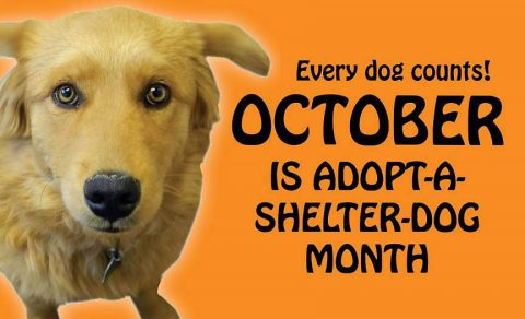 Montgomery County Animal Care and Control reminds everyone that October is Adopt a Shelter Dog Month