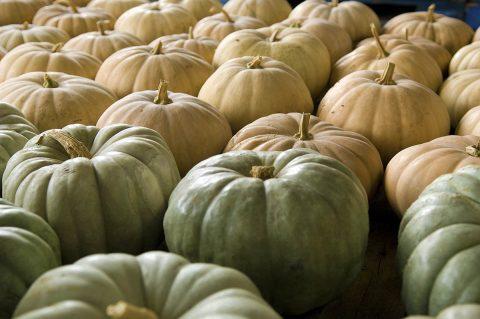 The Edible Pumpkin.