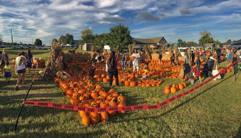 Children of all ages got to select a pumpkin from the pumpkin patch during Campbell Crossings National Night Out event.
