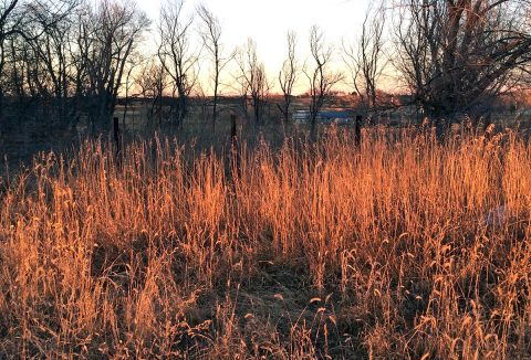 A wet winter allows grasses to grow profusely, but during the next fire season, the abundant dried grass fuels more small wildfires. (NASA/JPL-Caltech/Carol Rasmussen)
