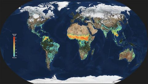 A reduction in global burned area in the 2000s had an unexpectedly large impact on methane emissions. (NASA/GSFC/SVS.)