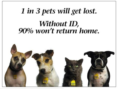 1 in 3 Pets will get lost. Without ID, 90% won't return home.