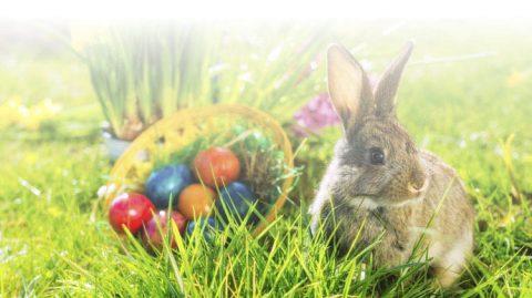Easter Eggstravaganza Easter Egg hunt