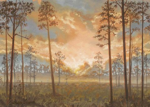 Pinelands Sunrise