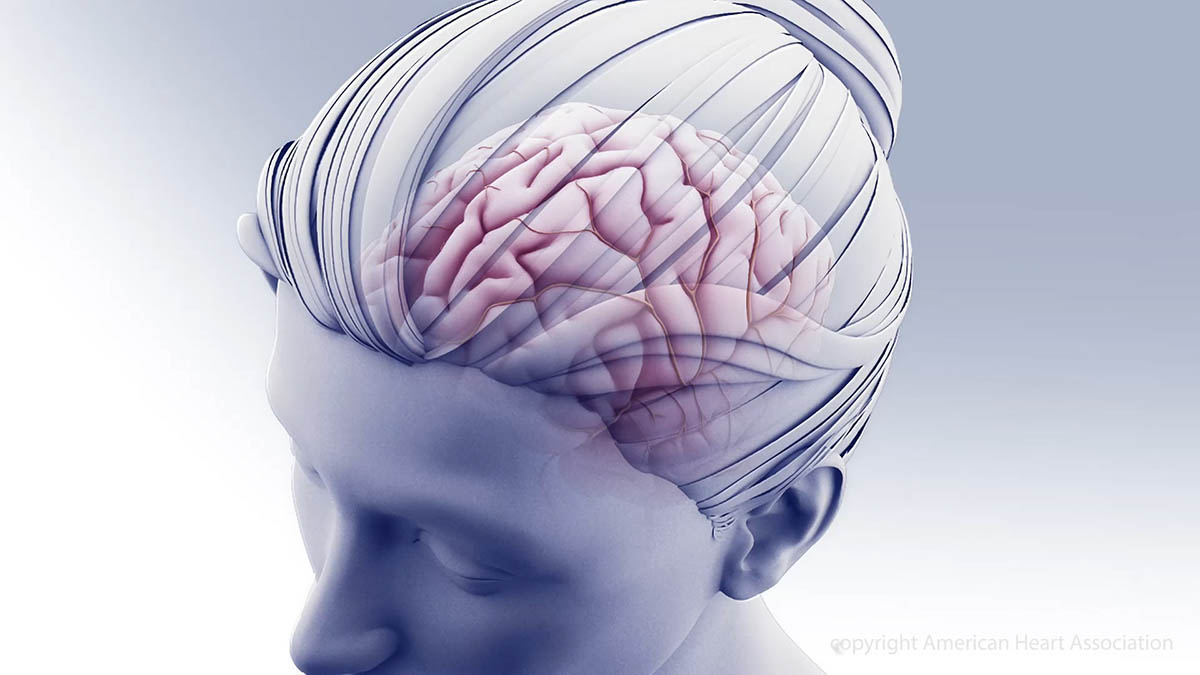 The brain has about 100 billion cells called neurons. It's made up of distinct parts, that developed though human evolution. (American Heart Association)