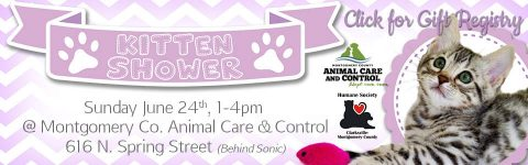 Kitten Shower & Gift Registry set for Sunday, June 24th.