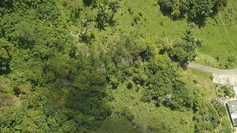 Damage from Hurricane Maria is seen from the air, as the G-LiHT team captured this image of a forest near Arecibo in 2017. (NASA)