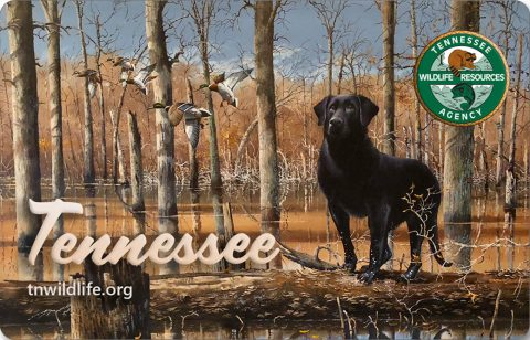 Tennessee Hunting and Fishing License Card New Artwork.