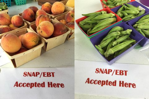 "Buying Farm fresh foods is a ""Snap"" at Tennessee Farmers Markets."