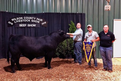 APSU's Frank the Tank won grand champion at the Wilson County Fair.