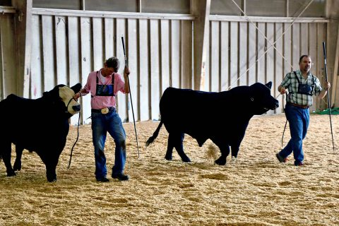 Colton Hudgins and Dr. Rod Mills during a recent beef show.