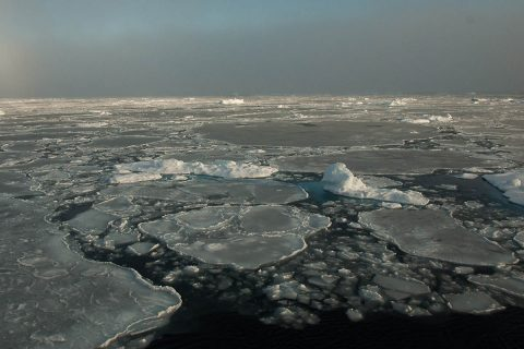 Small remnants of thicker, multiyear ice float with thinner, seasonal ice in the Beaufort Sea on September 30th, 2016. (NASA/GSFC/Alek Petty)