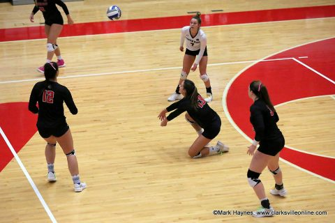 The OVC Regular Season Champion Austin Peay Women's Volleyball team begins quest for the OVC Volleyball Tournament Title starting Thursday at the Dunn Center. (APSU Sports Information)