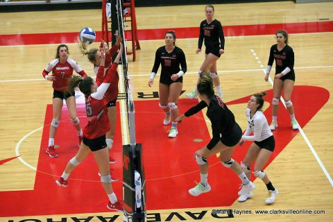 Austin Peay Women's Volleyball takes on Tennessee State in OVC Tournament action at the Dunn Center, Thursday. (APSU Sports Information)