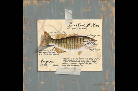 Camille Engel - Smallmouth Bass Oil Painting