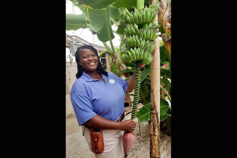 APSU graduate Khadejah Scott is working at Epcot's greenhouses.