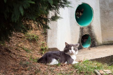 The cat colony that Austin Peay Sate University's Paws to Care maintains has about 20 felines.