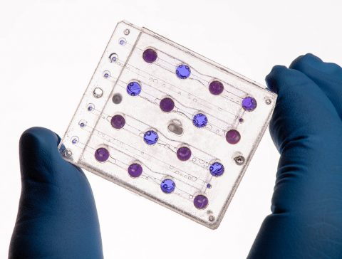 BioSentinel's microfluidics card, designed at NASA Ames, will be used to study the impact of interplanetary space radiation on yeast. Once in orbit, the growth and metabolic activity of the yeast will be measured using a 3-color LED detection system and a metabolic indicator dye. (NASA)