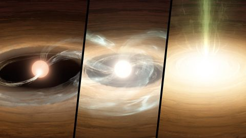 This illustration shows a young star undergoing a type of growth spurt. Left: Material from the dusty and gas-rich disk (orange) plus hot gas (blue) mildly flows onto the star, creating a hot spot. Middle: The outburst begins - the inner disk is heated, more material flows to the star, and the disk creeps inward. Right: The outburst is in full throttle, with the inner disk merging into the star and gas flowing outward (green). (Caltech/T. Pyle (IPAC))
