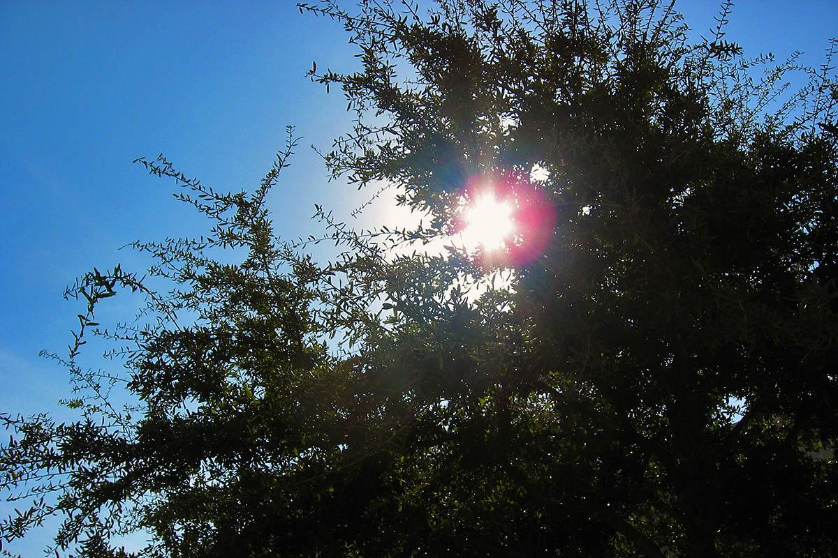 Sunshine. (American Heart Association)