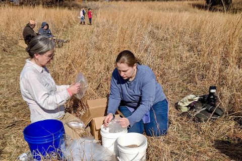 Dunbar Cave State Park to hold Prairie Volunteer Workday on Saturday, August 31st. (Amanda Blount)